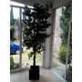 Ficus Artificial Decorativo