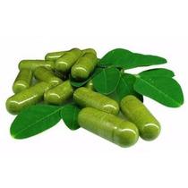 Moringaoleifera 100 Caps 100% Orgánicas