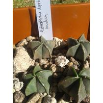Paquete De Cactus #2 Especies Selectas