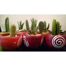 Cactus Y Suculentas Decoradas En Maceta Venta Al Mayoreo