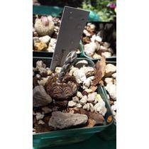 Paquete De Cactus #4 Especies Selectas