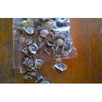 Moringaoleifera Para Siembra 20 (semillas)