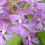 Impactante Hermosa Flor Purpura Orquidea 25 Semillas