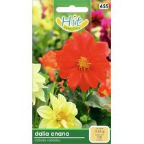 1 Sobre De Semilla Flor Dalia Enana,colores Variados