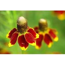 Gorro Mexicano 10 Semillas Flor Jardín Sdqro