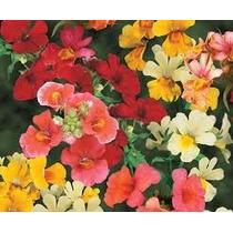 Nemesia Mix 10 Semillas Flor Rastrera Jardín Mpsdqro
