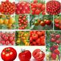 40 Semillas Tomate Mezclado