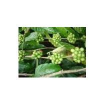 7 Semillas De Melia Azadirachta Indica (neem) Codigo 907