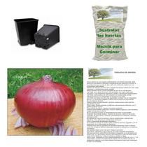 10 Semillas De Cebolla Roja En Kit Para Siembra Completo