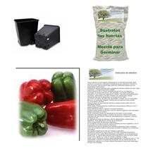 10 Semillas De Chile Pimiento En Kit Para Siembra Completo