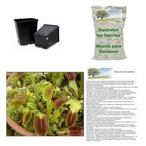 Semillas Dionaea Venus Atrapamoscas Kit De Siembra Completo