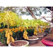 Pack De 50 Semillas De Papaya Amarilla Hibrida De Asia, Oohh