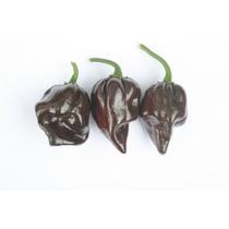 10 Semillas Capsicum Chinense - Habanero Chocolate Cod. 463