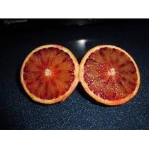 Naranja Sangre Roja Semillas Exoticas Fruto