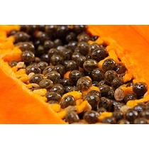 110 Semillas De Papaya Maradol Roja Hubrida - Organicas Ooh