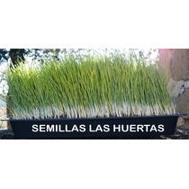 Wheat Grass Kit De Germinacion Para Crecer Pasto De Trigo.