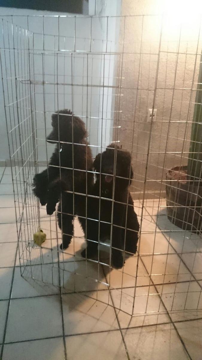 Jaula corral para perros y cachorros plegable for Jaulas de perros