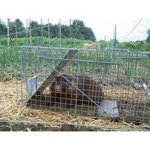Trampa Para Atrapar Animales Profesional No Los Daña Unica
