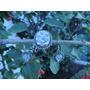 Dije/ Prendedor Y Aretes Flor Natural Encapsulada -10%