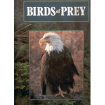 Perry, Phillip. Birds Of Prey. 1990. Libro En Inglés.
