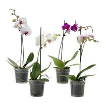 Macetas Para Orquídeas De Plástico Transparente Daa