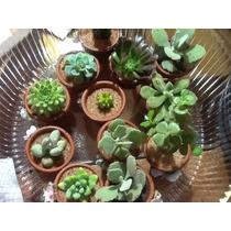 Macetas De Cactus Y Suculentas Para Recuerdos
