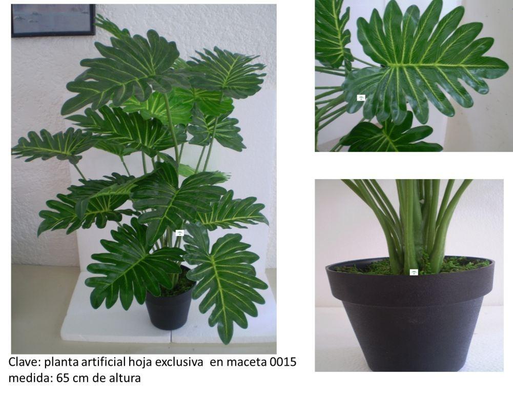 Macetas y plantas con follaje mmu en mercadolibre for Tipos de plantas para macetas