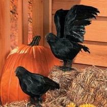 Realista Emplumada Crows -set De 2 - Gran Halloween Prop!
