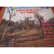 Lp Los Gavilanes Del Norte Caminos De La Vida, Envio Gratis