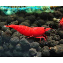 Gambas Camarones Red Fire Alto Grado 5x$1070 Importadas