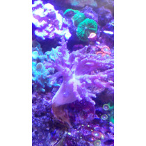 10 Corales X $1000 Super Pack Surtido Blandos Y Duros