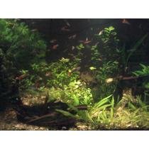 Sustrato Nutritivo´´´´oferta´´´´ Acuarios Plantados
