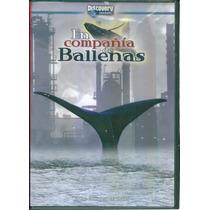 En Compañia De Ballenas. Discovery Channel Formato Dvd