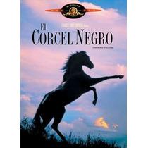 Dvd El Corcel Negro ( Black Stallion ) - Carroll Ballard