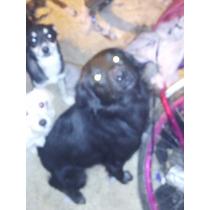 Adopción De Perritos