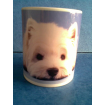 Taza De Porcelana De West Hihland White Terrier