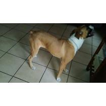 En Adopcion Cachorra Boxer Lea Bien La Descripción