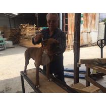 Perro Boxer, Pedigree Azul, Tatuado Y Chip