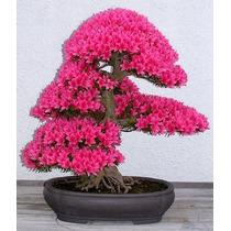 Cultivos Y Cuidados Del Bonsai - Libro