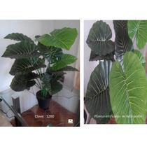 Plantas Verdes Decorativas