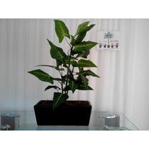 Areca Planta Artificial Mdn