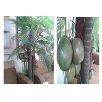 Arboles Ficus Dracenas Areca Maa