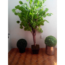 Arbol De Durazno Y De Ficus Maa