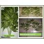 Hojas Artificiales De Bambu Y De Ficus Mmu