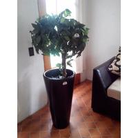 Arbol Ficus Artificial Redondo
