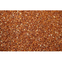 10 Gramos De Semillas De Quinoa Roja (chenopodium Quinoa)