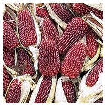 Maiz Rojo 10 Semillas Hortaliza Jardín Sdqro