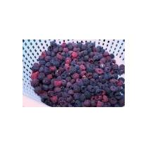 10 Semillas De Rubus Leucodermis (frambuesa Azul) Cod. 967