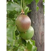 25 Semillas De Passiflora Edulis (maracuya) Codigo 1010