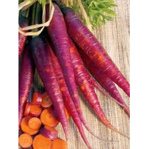Zanahoria Púrpura 20 Semillas Hortaliza Jardín Planta Sdqro
